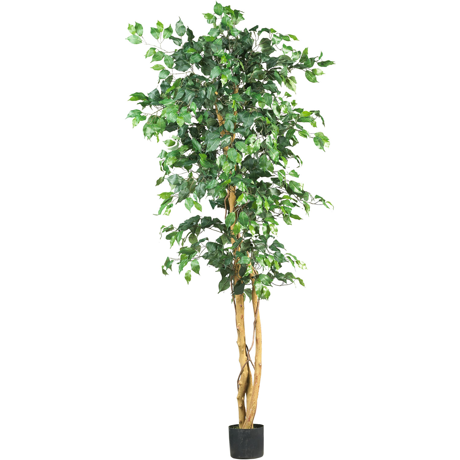 6 foot artificial ficus tree: potted | 5209