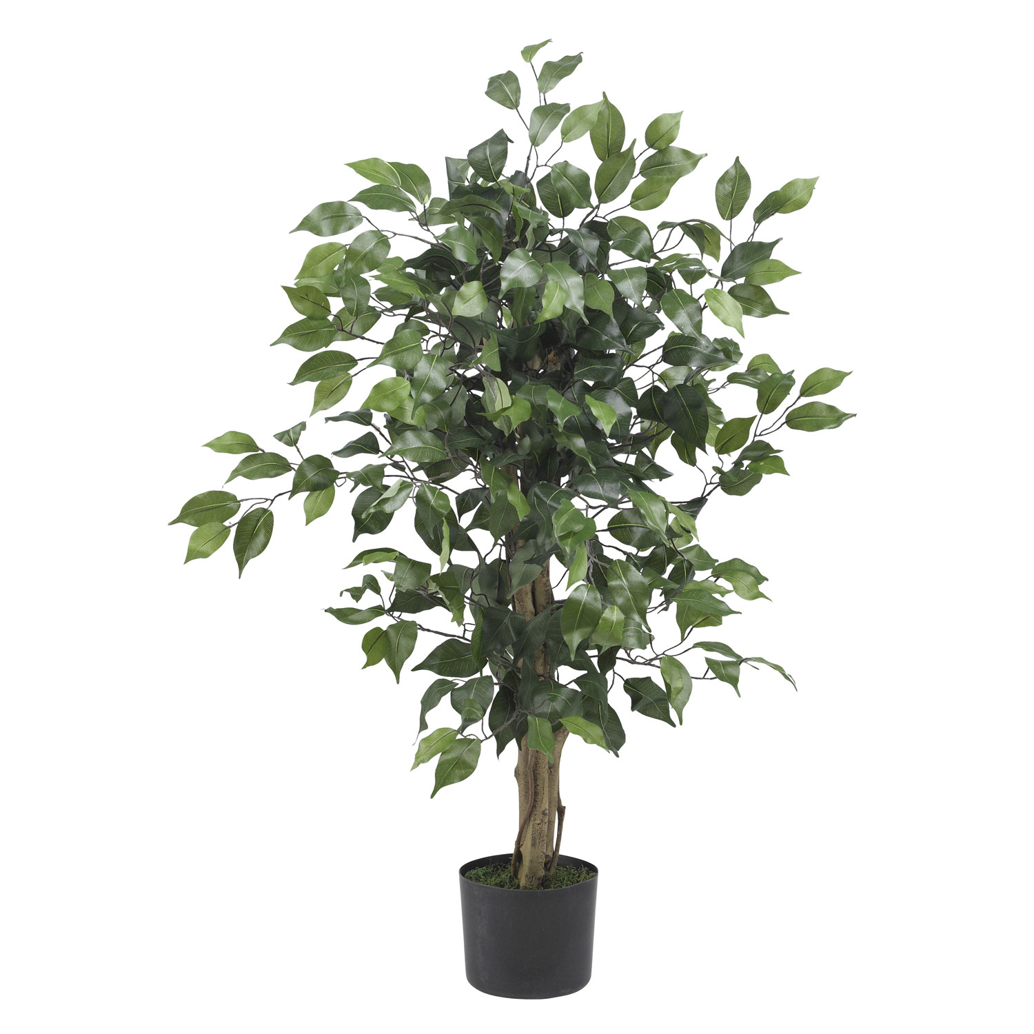 3 Foot Ficus Tree Potted 5298