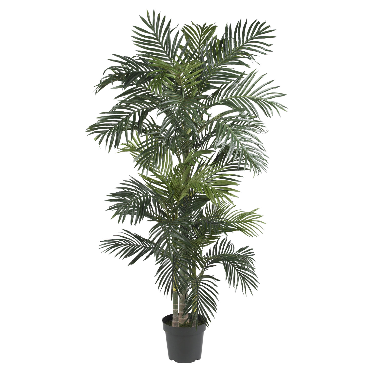6.5 foot Golden Cane Palm Tree: Potted 5289