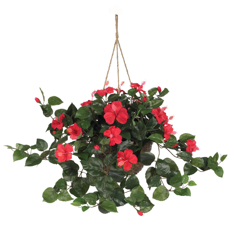 24 inch hibiscus in hanging basket 6614 24 inch hibiscus in hanging basket mightylinksfo
