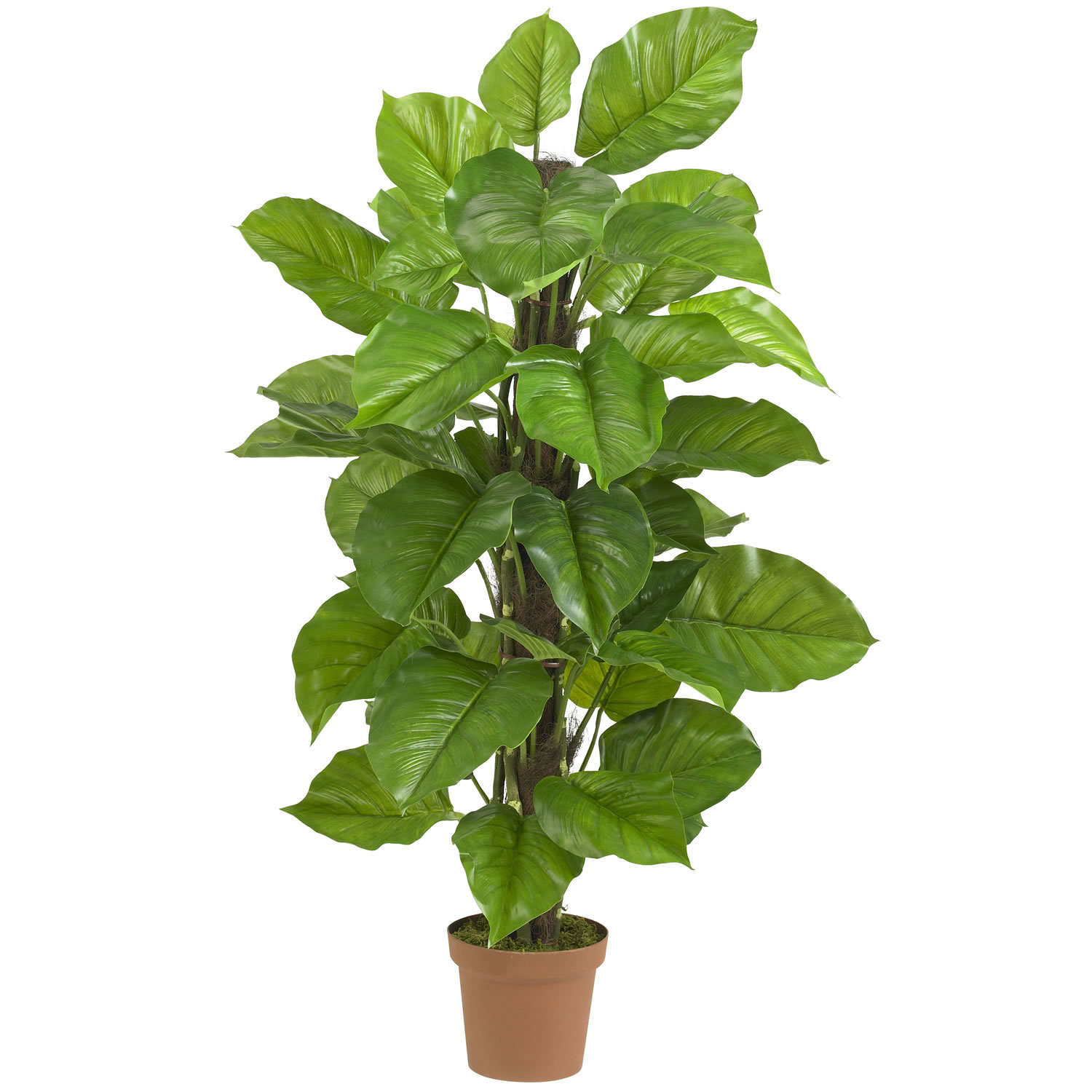 Indoor tropical plant identification quotes - Big leaf indoor plants ...