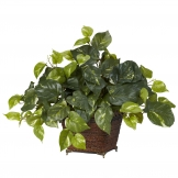 17 Inch Pothos In Coiled Rope Planter