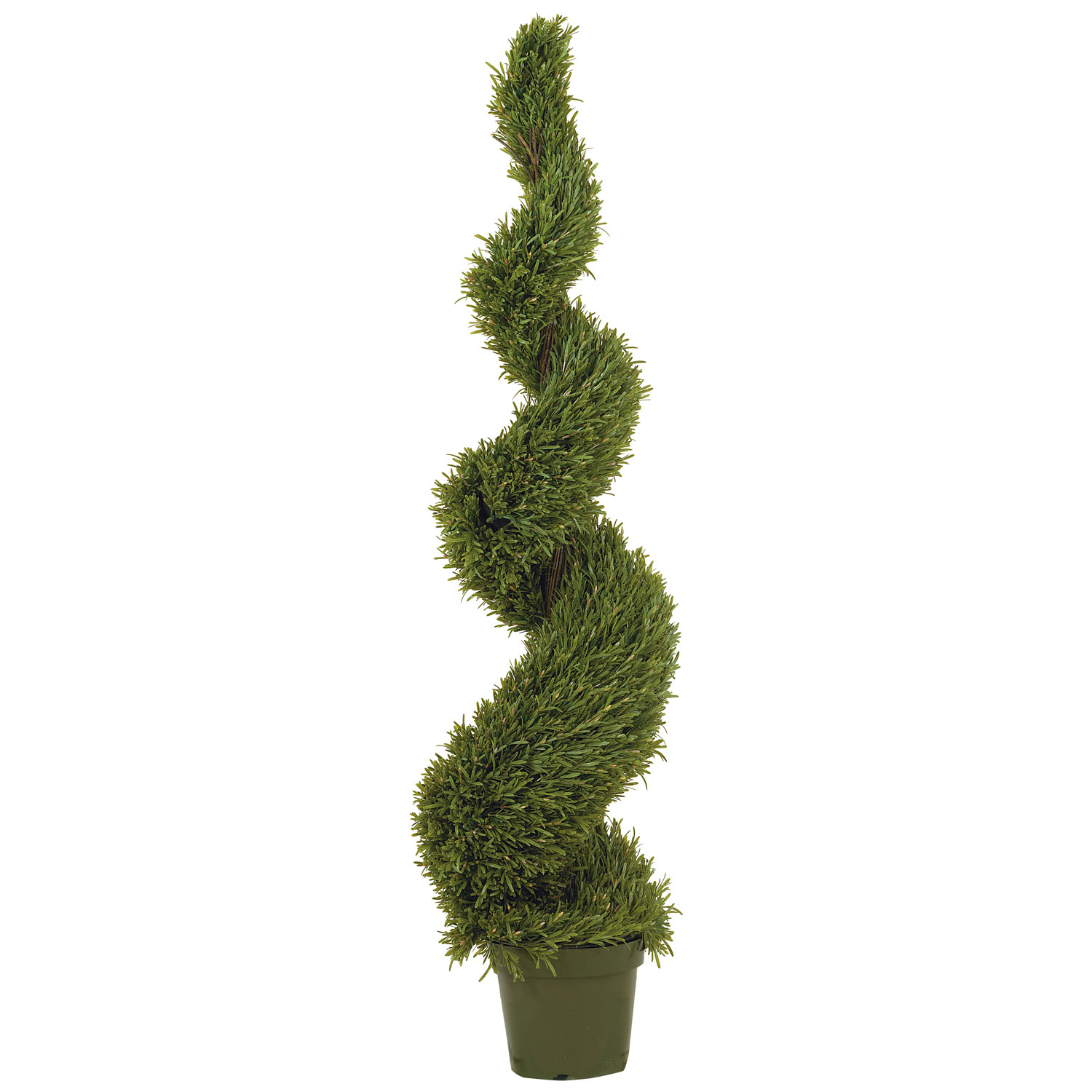 Home 5 foot x 15 inch Rosemary Spiral Topiary: Potted