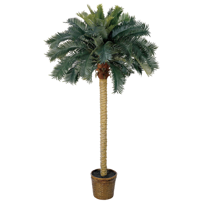 6 Foot Sago Palm Tree In Basket 5107