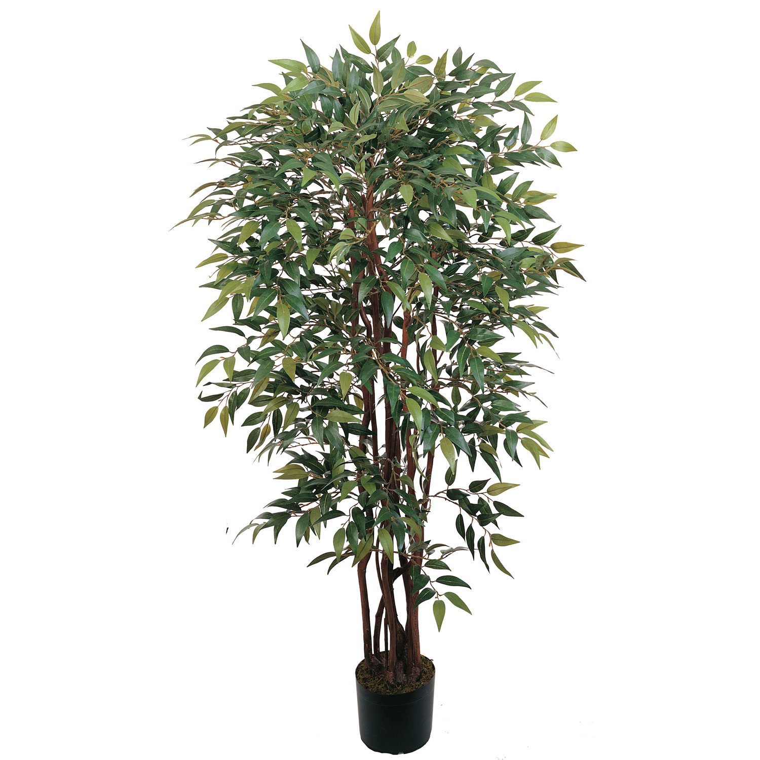 4 Foot Smilax Tree Potted 5081