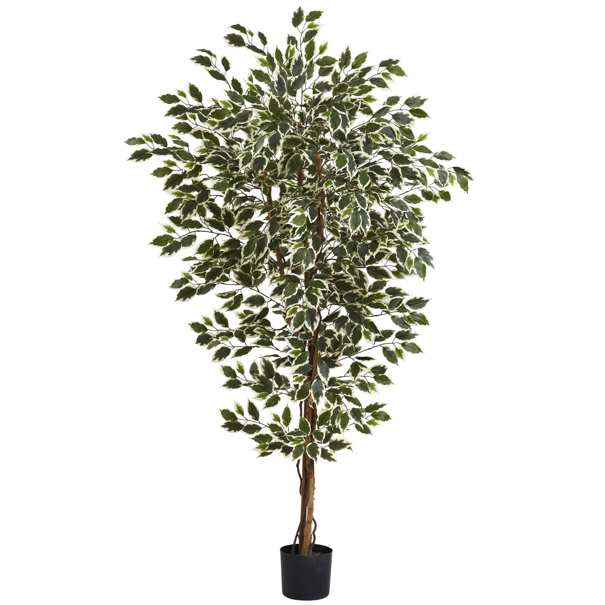 6 foot Indoor (3 Trunk) Silk Hawaiian Ficus Tree: Potted 5437