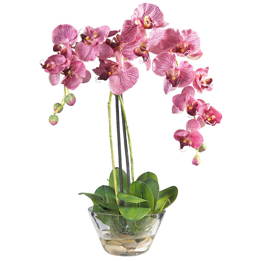Phalaenopsis orchid with glass vase 4643 closeup image dhlflorist Gallery