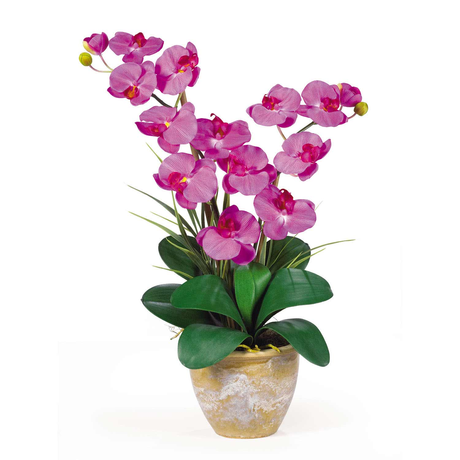 Double Stem Phalaenopsis Silk Orchid Arrangement 1026 Nearly Natural