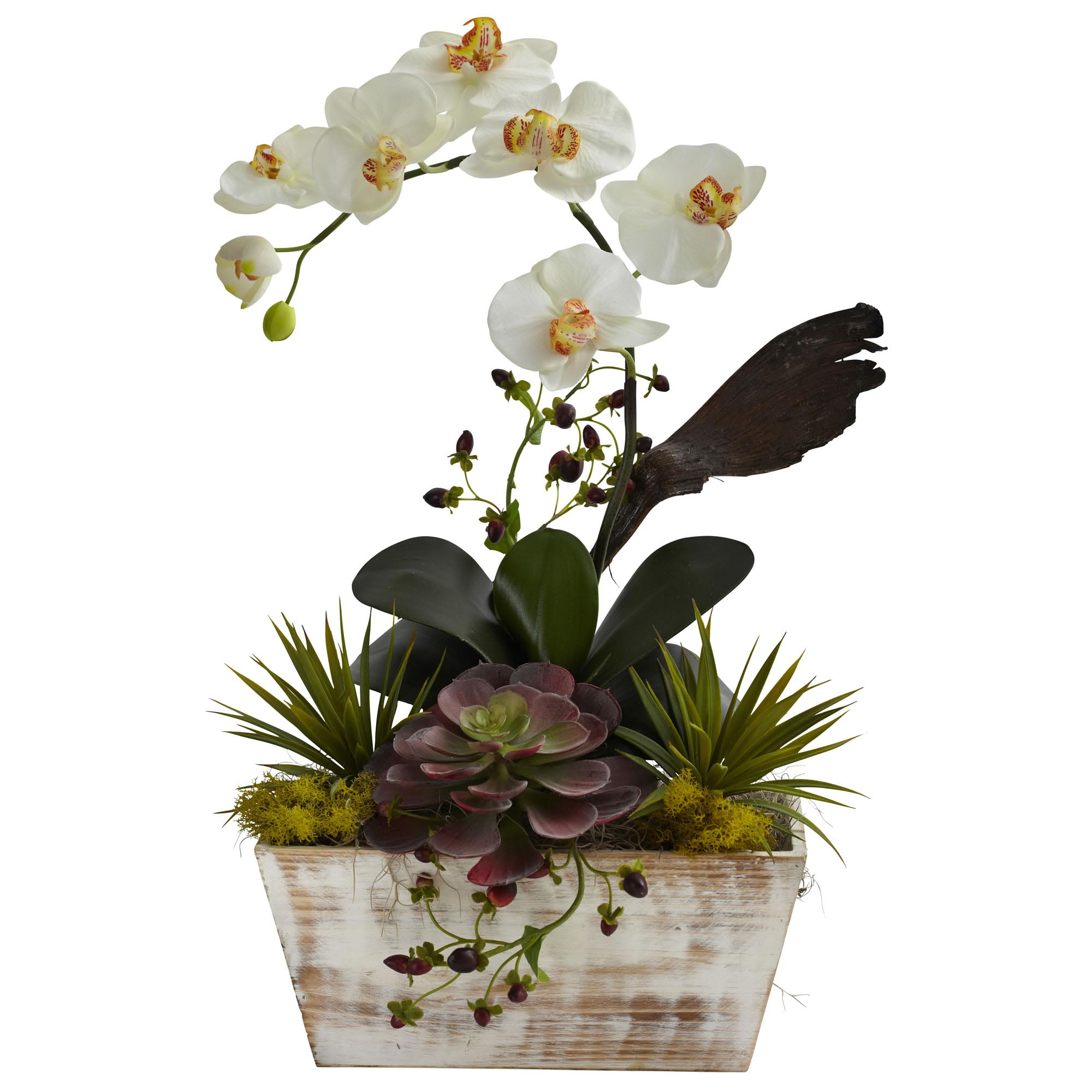 21 inch silk orchid succulent garden in white wash planter 1326 closeup image dhlflorist Gallery