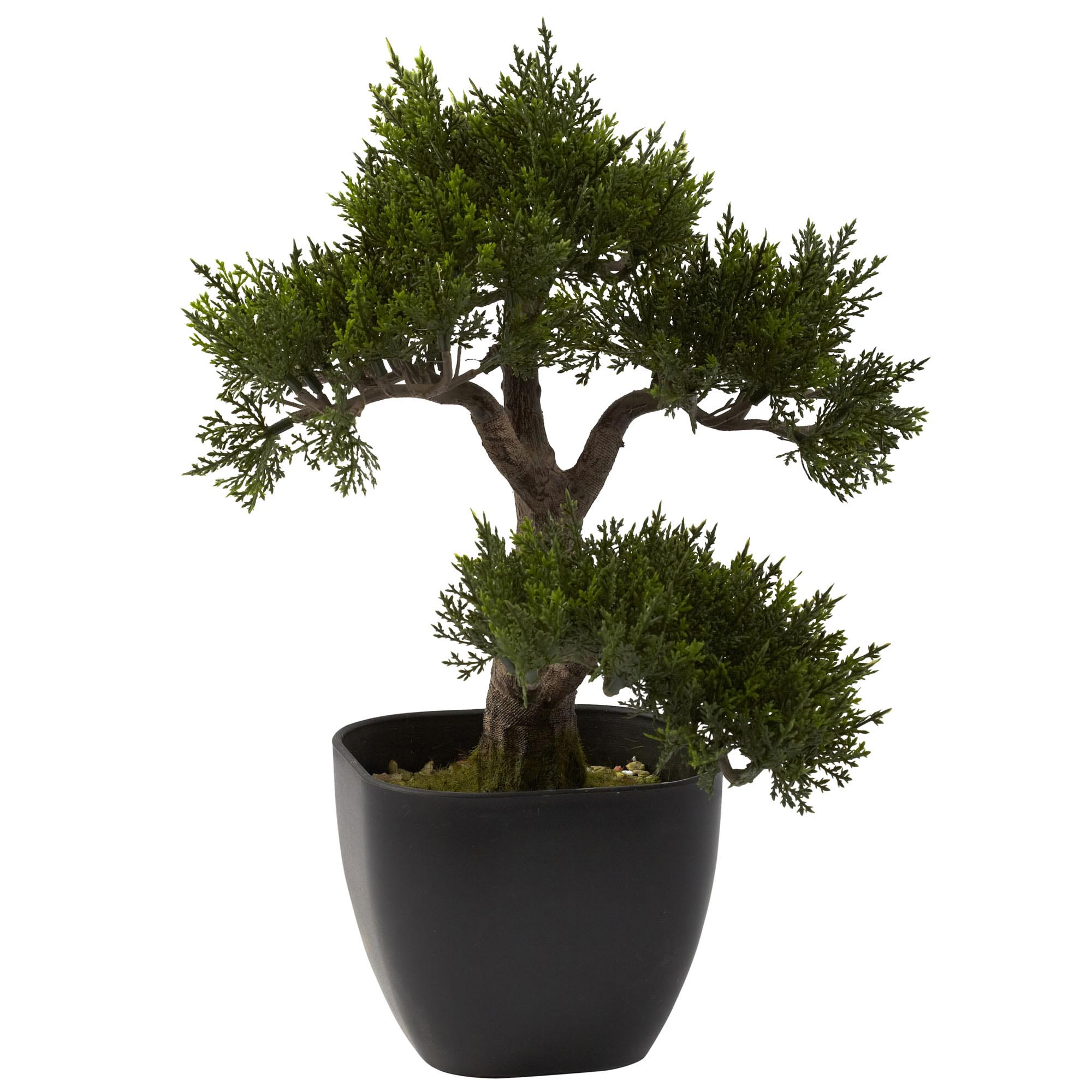 Preserved cypress bonsai 7 h contemporary phoenix by botanical - 15 Inch Artificial Cedar Bonsai In Planter