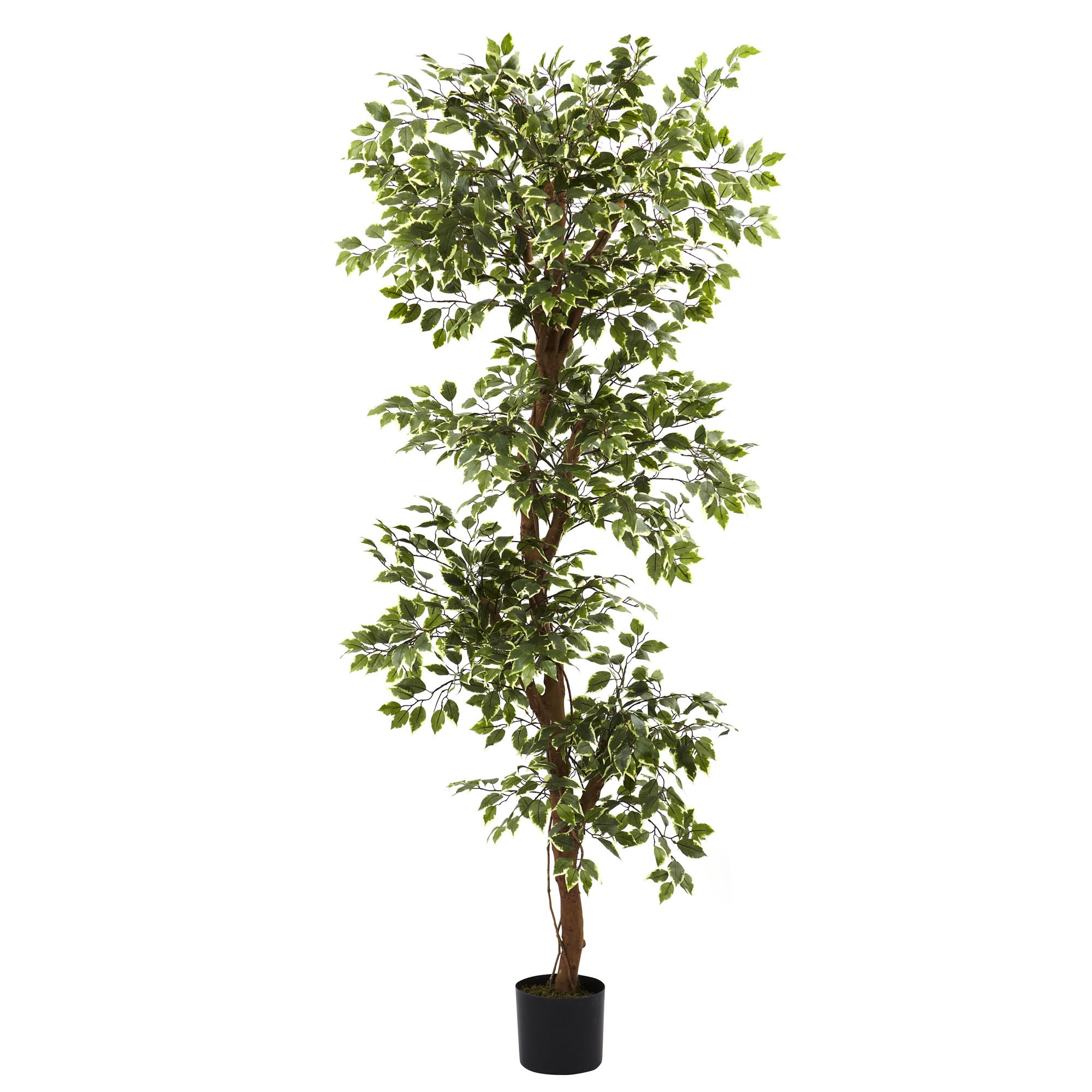 6 foot Artificial Variegated Ficus Tree: Potted 5345
