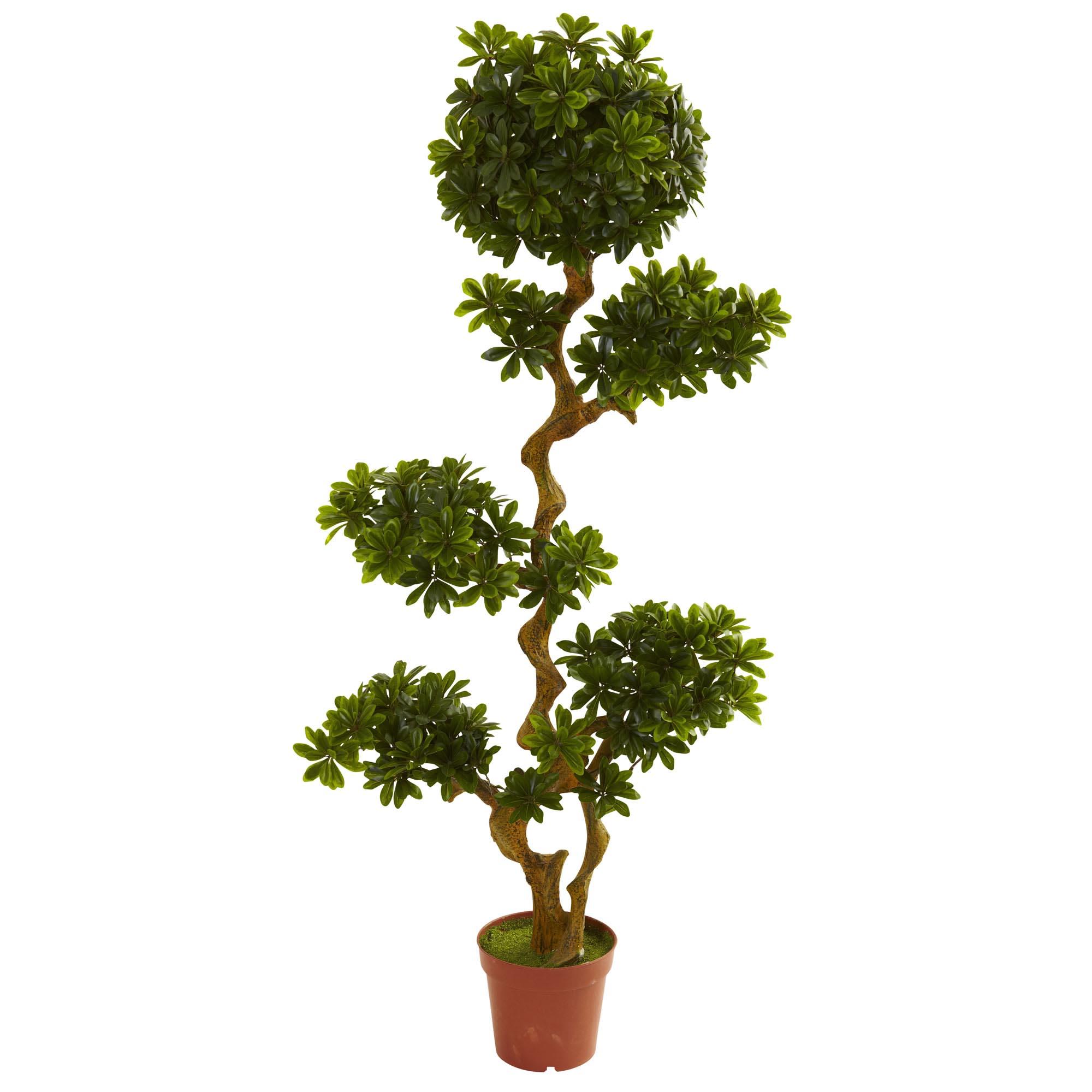 5 foot outdoor artificial pittosporum: limited uv | 5393