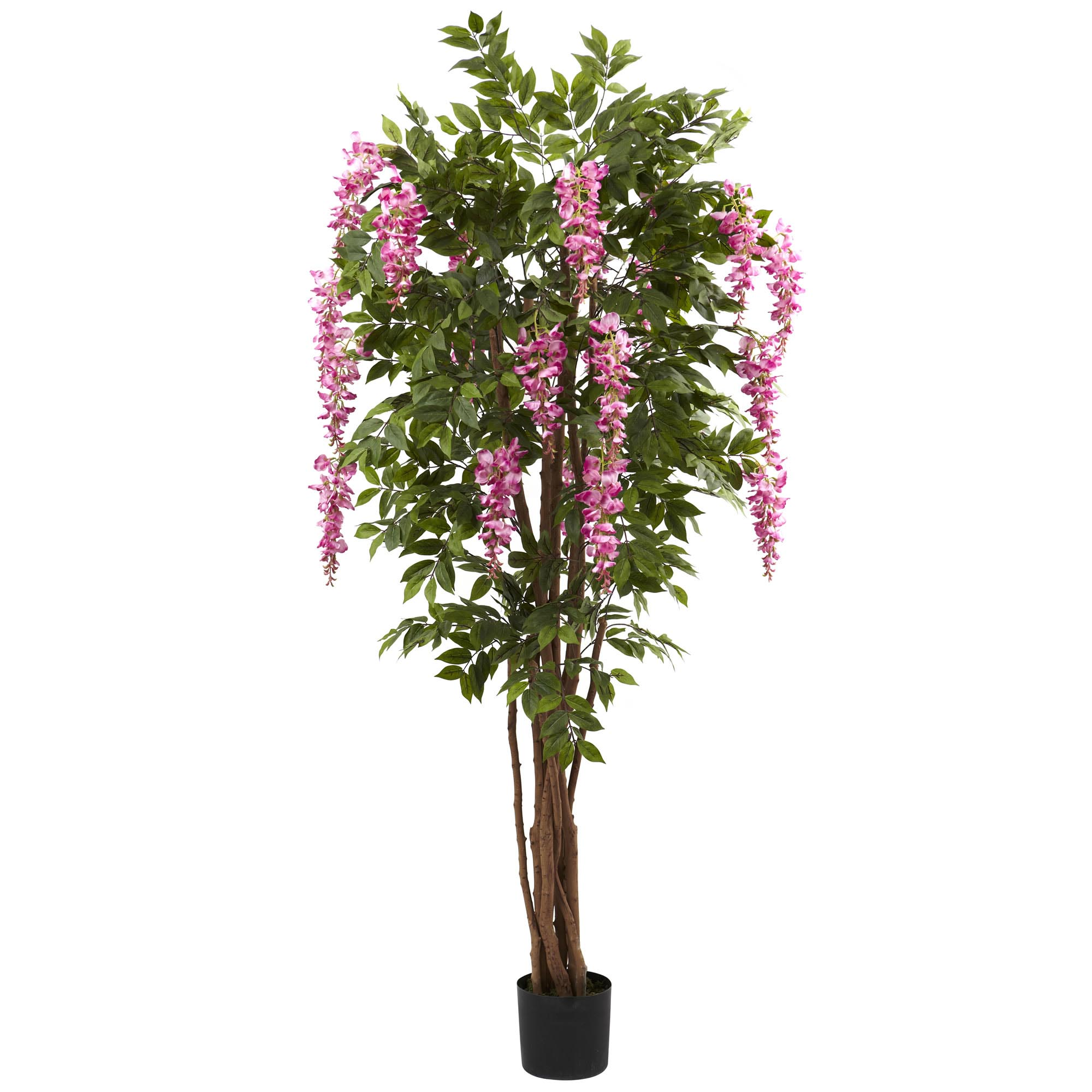 Info about Silk-Wisteria-Tree Product Picture 1135