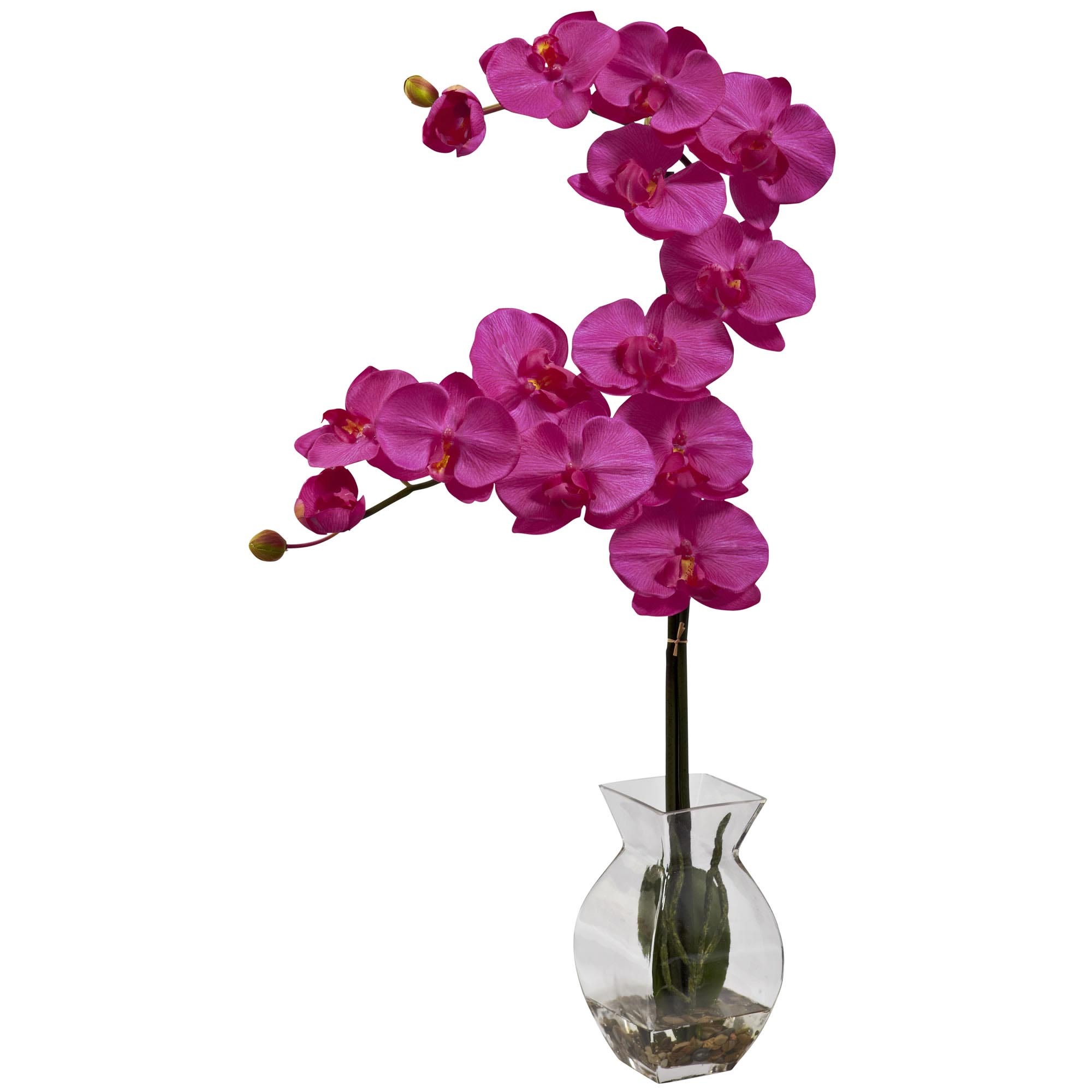 24 inch phalaenopsis orchid arrangement in vase 1295 closeup image reviewsmspy