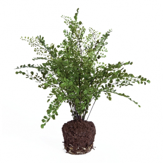 Slim Logo; 18 Inch Maidenhair Fern Drop In   OVERSTOCK