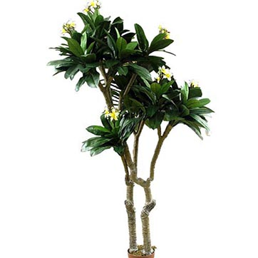 6.5 Foot Frangipani Tree In Pink: Potted By Artificial Plants And Trees