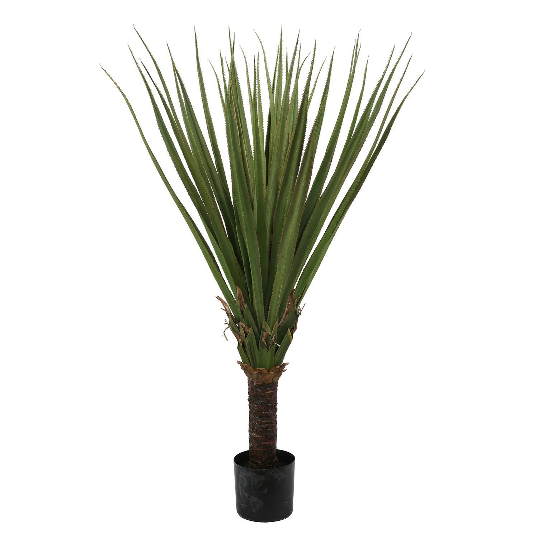 Beautiful Pandanus Palm Tree Plastic Pot Product Photo