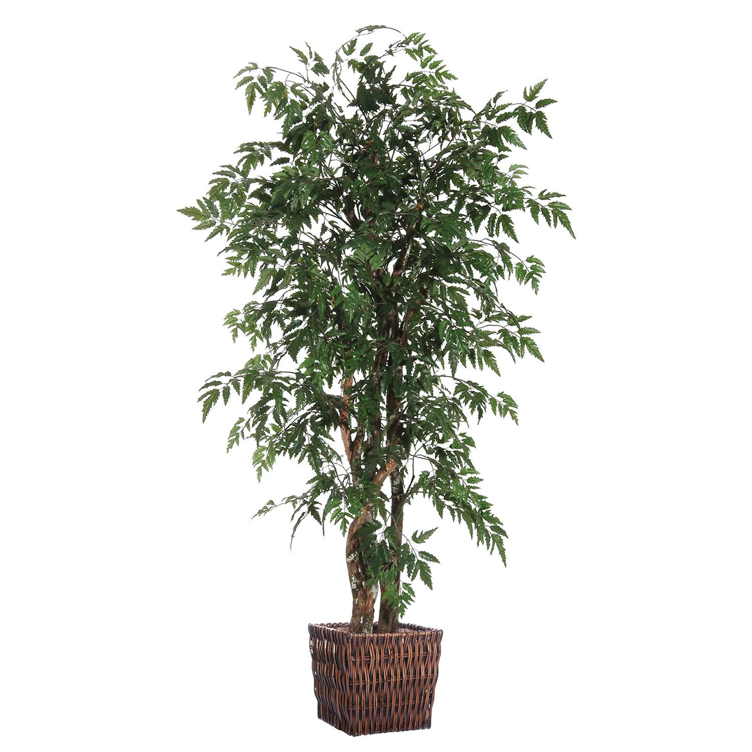 6 Foot Ming Executive Tree W/ Natural Trunk In Willow Basket