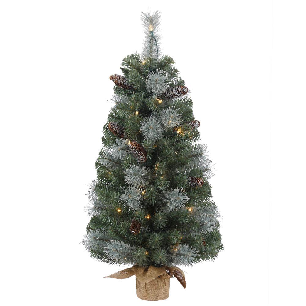 3 foot Shasta Blue Mix Tabletop Pine Tree: 50 Clear Mini Lights