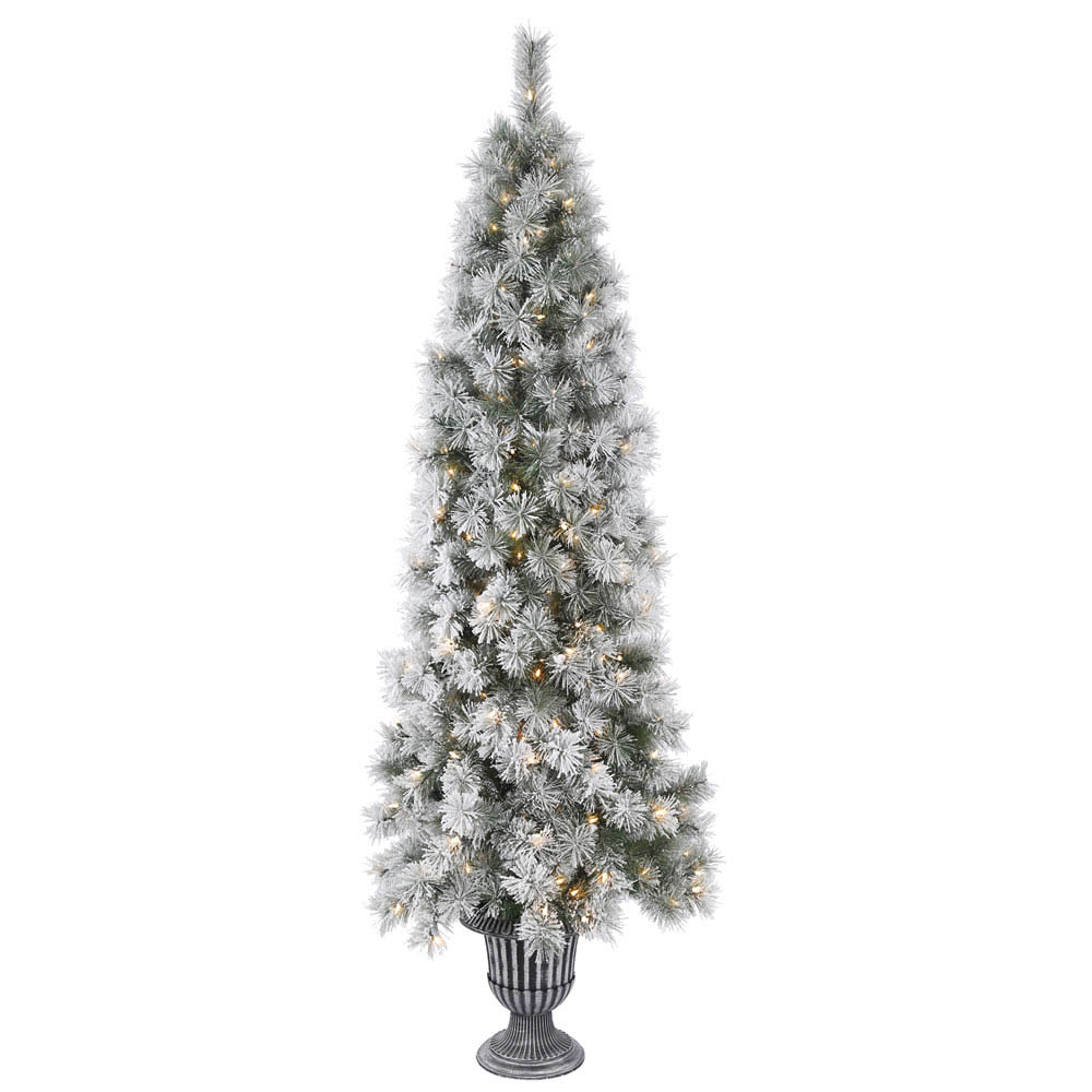 Frosted Slim Christmas Tree: Hard Needle Potted Frosted Brewer Pine Tree