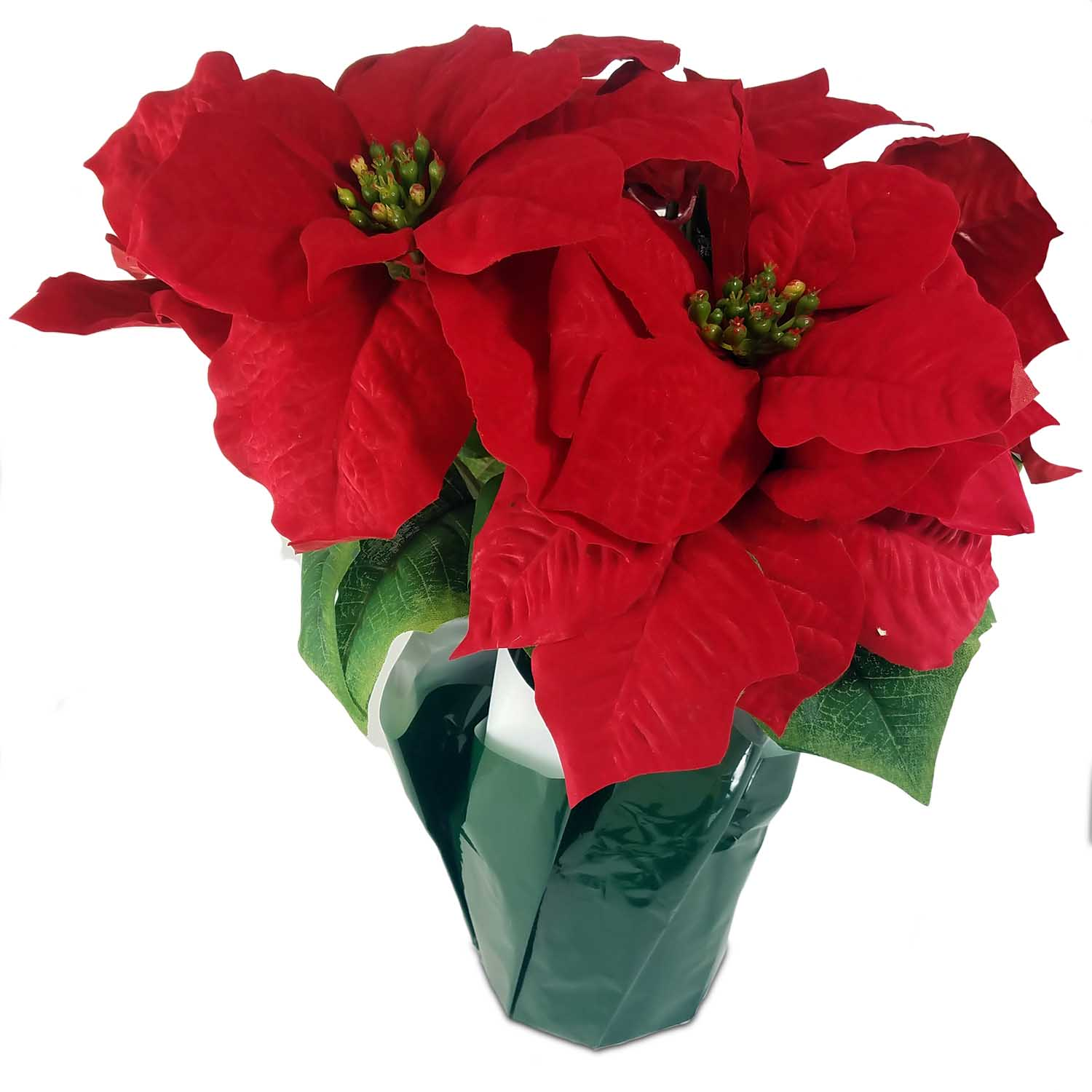 155 Inch Red Poinsettia Bush Wrapped In Green White Paper