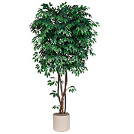 Fake Ficus Trees